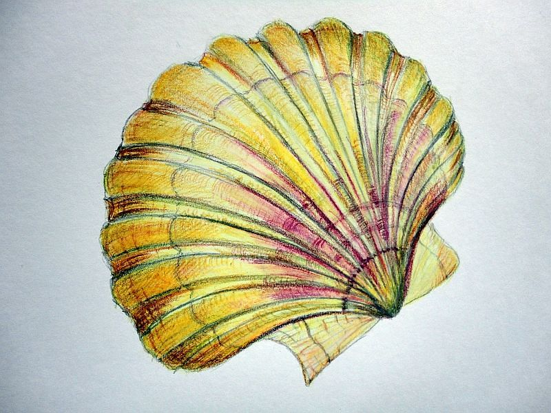 Workshop Musle Akvarelovymi Pastelkami